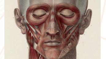 PART 1. 인류의 얼굴은 왜 점점 작아졌을까