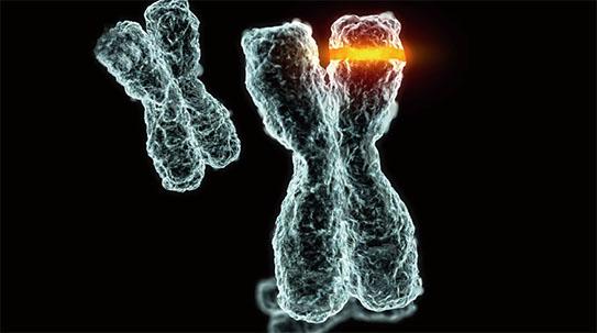 PART 1. Y염색체 1000만 년 뒤 사라질까