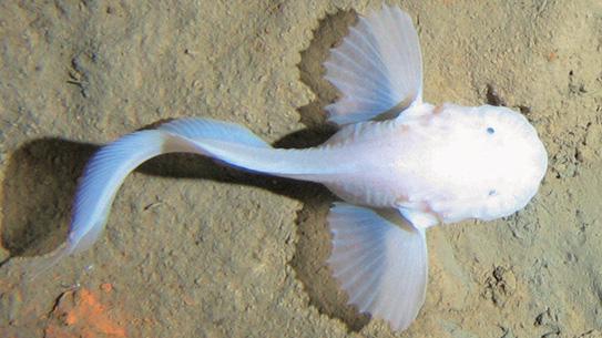 가장 깊은 곳에 사는 물고기 발견!