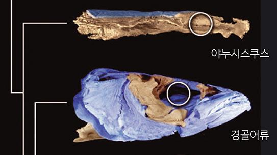 [과학뉴스] 두 얼굴을 가진 고대 물고기