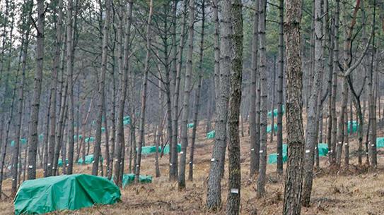 [Hot Issue] 소나무재선충병 방제 현장을 가다