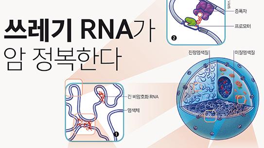 PART3. 쓰레기 RNA가 암 정복한다