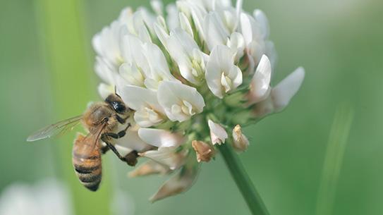 꿀벌이 새 집을 찾는 방법