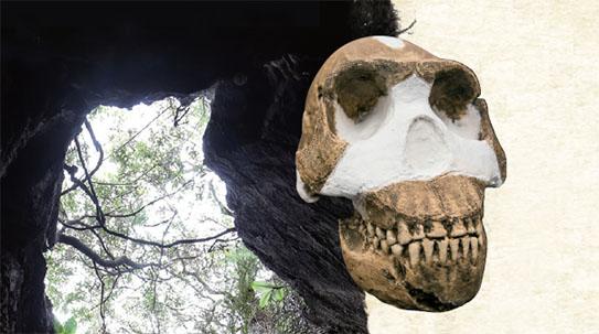 [흔들리는 인류기원] Part1. 최초의 인류진화 역사 바뀔까