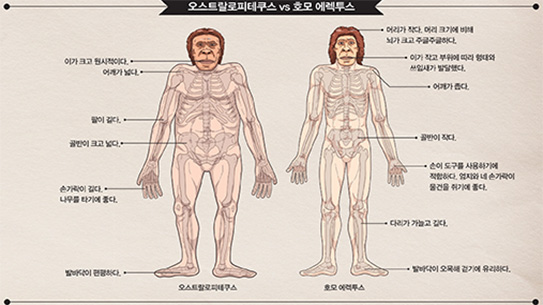 [PART 1] 화석이 알려주는 인류의 진화