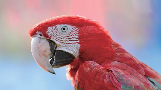 따라쟁이 앵무새는 뇌부터 다르다?