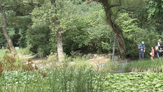 국립수목원과 함께한 여름 숲캠프