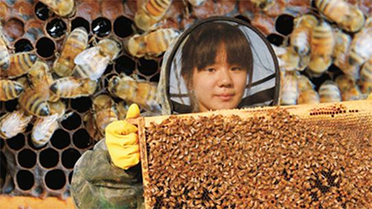 꿀벌 탐사대 출동!