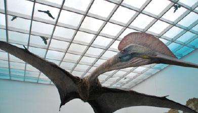 [Knowledge] 파충류의 속사정2 하늘의 거인 케찰코아틀루스