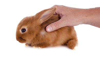 Part 4. 동물실험 안 할 순 없을까?