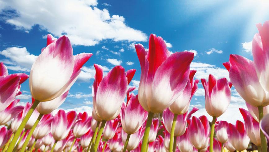 생존전략 1. 화려한 꽃 미인계