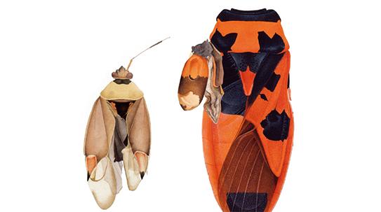 아름답고 섬뜩한, 체르노빌의 곤충들