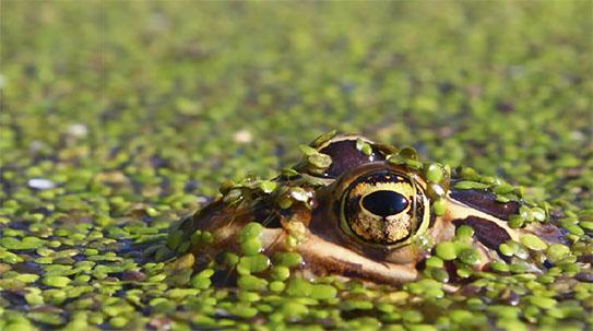 [숲이야기] 광릉숲의 개구리들