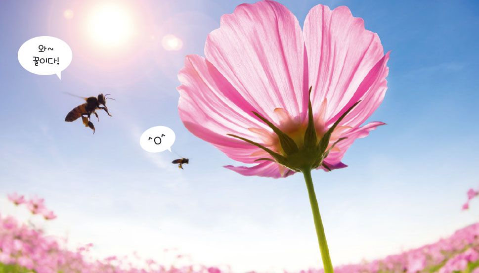 [News & Issue] 꿀벌은 꿀맛을 알까?
