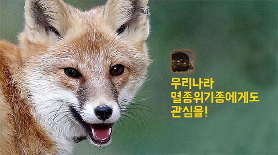 Part 4. 우리나라 멸종위기종에게도 관심을!