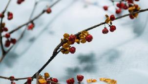 [News & Issue] 영하 20℃, 습도 40%… 이곳에서 씨앗이 겨울잠을 잔다