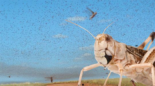 벌레의 습격