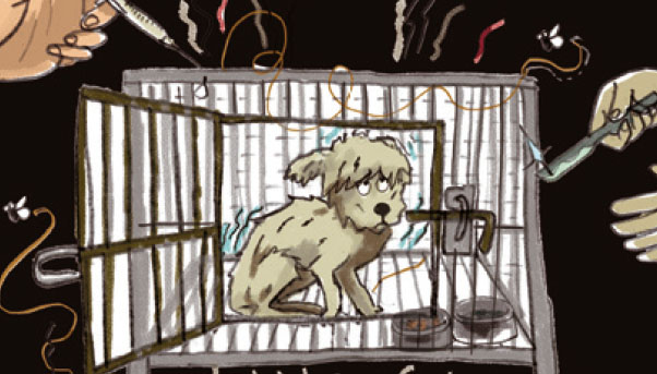 인간의 이기심이 만든 강아지 번식공장