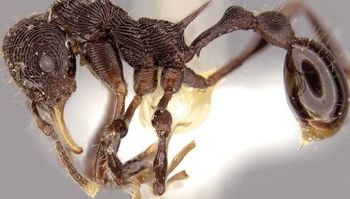 [과학뉴스] 독개구리 뱃속은 개미 연구소?!