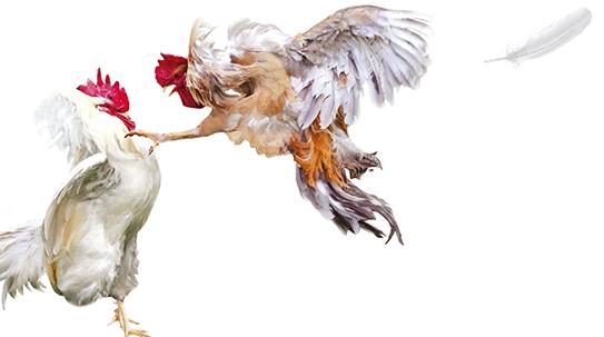 Part 1. 닭은 억울하닭?