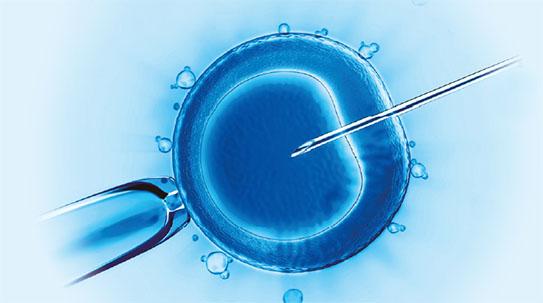 [포커스 뉴스] 돼지의 수정란에서 자란 인간세포, 키메라 연구 불 붙나