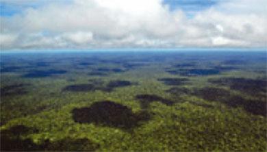 [과학뉴스] 아마존 열대우림, 8000년 전 원주민들이 키웠다?!