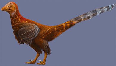 [과학뉴스] 공룡이야, 닭이야? 깃털 가진 소형 수각류 공룡 발견