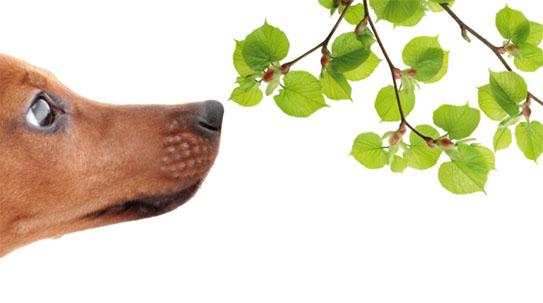 [Issue] 때 아닌 '개 코' 논란 사람도 개 만큼 맡는다!