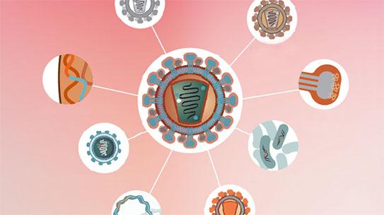 Part 3. 인체, 백신을 기억하다