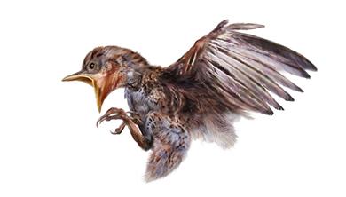 [과학뉴스] 호박 속에 생생하게 남은 9900만 년 전 아기 새