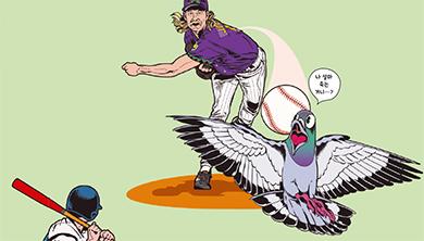 날아가던 새가 야구공에 맞을 확률