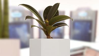 [SW 기업 탐방] 흙 없이 잘 크는 기특한 반려식물 피스찰리