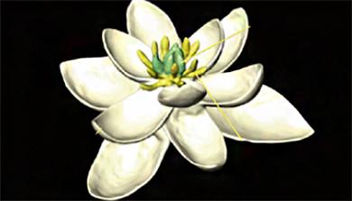 [과학뉴스] 이것이 지구 최초의 꽃