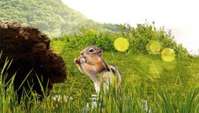 Part 5. 숲 속의 다람쥐는 언제쯤 돌아올까