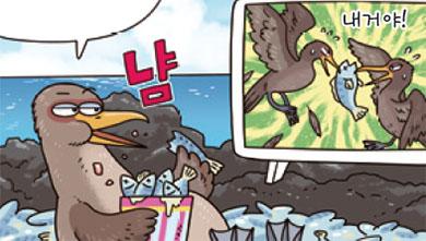 [가상인터뷰] 갈라파고스 가마우지가 날지 못하는 이유는?