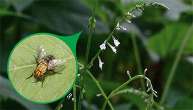 [식물 속 동물 찾기] 파리를 죽이는 유독식물 파리풀