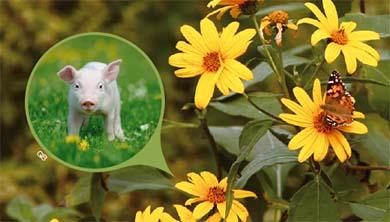 [식물 속 동물 찾기] 뚱딴지 같은 꽃과 줄기를 가진 돼지감자