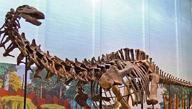 [공룡은 왜?] 공룡 백과사전에서 완전히 사라졌다?! 세이스모사우루스