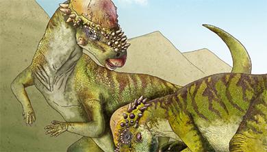 [공룡은 왜?] 단단한 머리뼈로 박치기를 쾅! 파키케팔로사우루스
