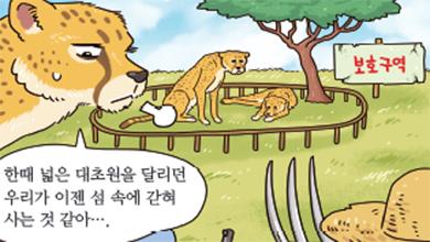 [가상인터뷰] 최고의 달리기 선수 치타, 멸종 위기에 처하다!