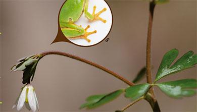 [식물 속 동물 찾기] 개구리발톱