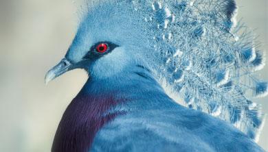 [화보] 비둘기의 알록달록 반전 매력
