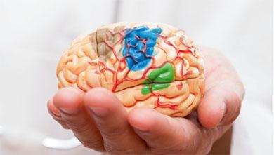 [과학뉴스] 공포와 공격성 나타내는 신경회로 찾았다