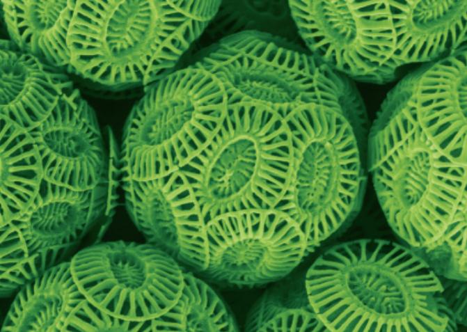 [과학뉴스] 해조류 죽이는 바이러스가 구름을 만든다?