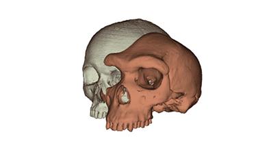 인류의 눈 위 뼈가 평평해진 이유는?