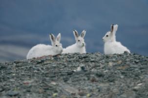 [Issue] 뜨거운 여름이 바꿔놓은 북극 생태계, 2018 북극일기