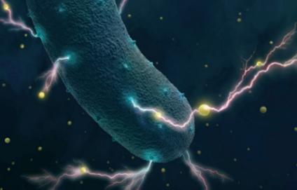 [과학뉴스] 장내 미생물의 '짜릿한' 비밀