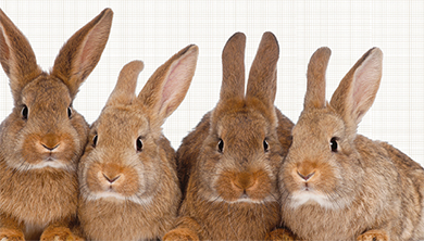 [실전! 반려동물] 토끼가 사료를 안 먹어요!