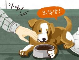 [반려동물 고민상담소] 개가 주인을 자꾸 물어요