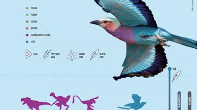 [Infographic] 비늘에서깃털까지